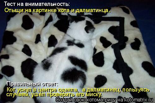 Котоматрица: Тест на внимательность: случаем, ушел проверить его миску. Кот уснул в центре одеяла,  а далматинец, пользуясь  Правильный ответ: Отыщи на ка