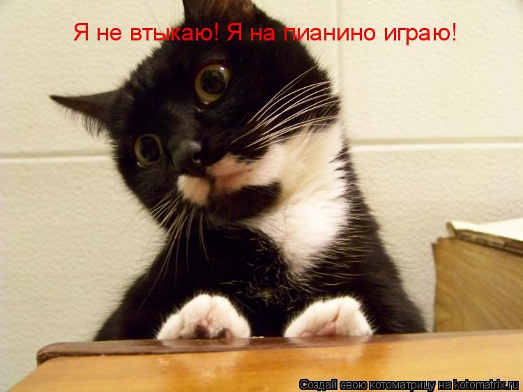 Котоматрица: Я не втыкаю! Я на пианино играю!