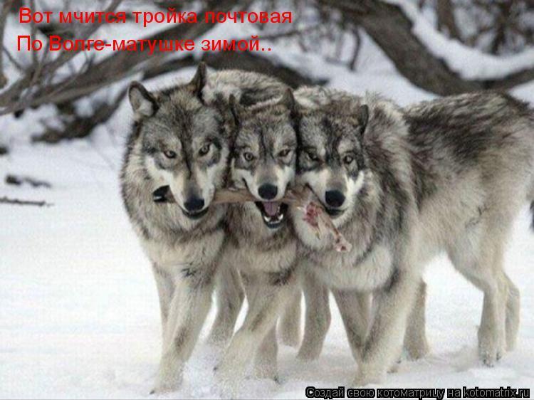 Котоматрица: Вот мчится тройка почтовая По Волге-матушке зимой..