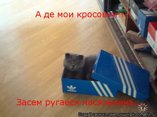 Котоматрица: А де мои кросовки!!!! Засем ругаеся насяльника...