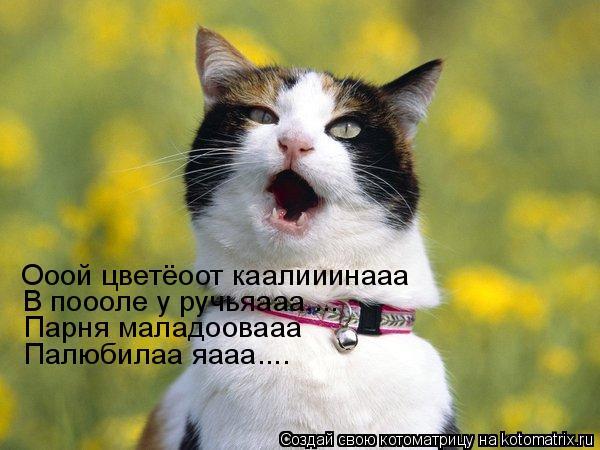 Котоматрица: Ооой цветёоот каалииинааа В поооле у ручьяааа.... Парня маладоовааа Палюбилаа яааа....