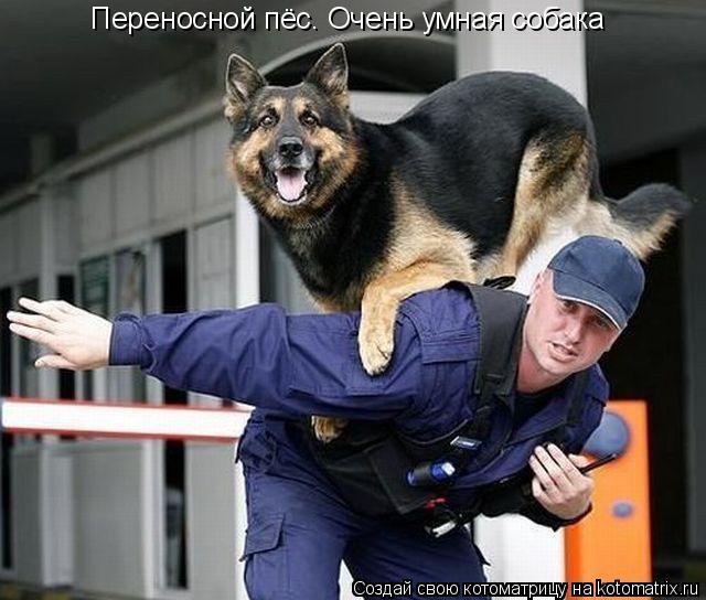 Котоматрица: Переносной пёс. Очень умная собака