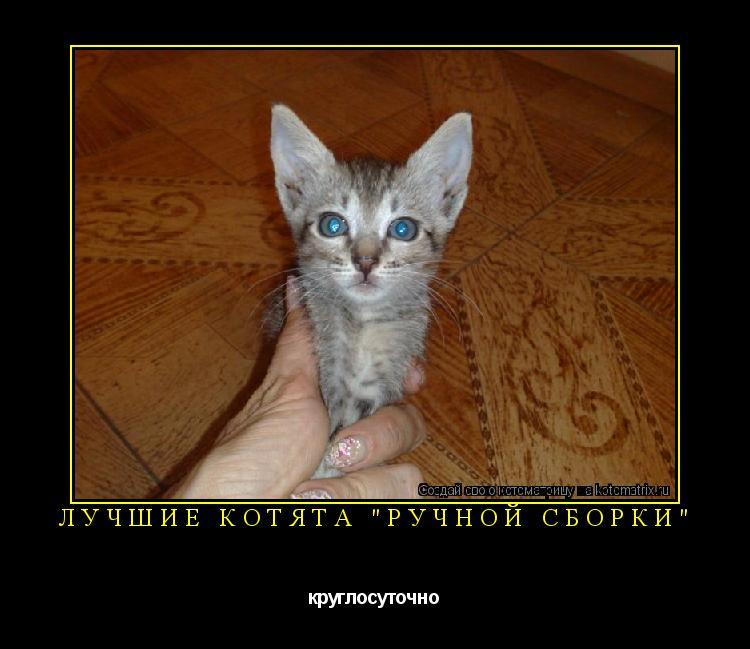 """Котоматрица: Лучшие котята """"ручной сборки"""" круглосуточно"""