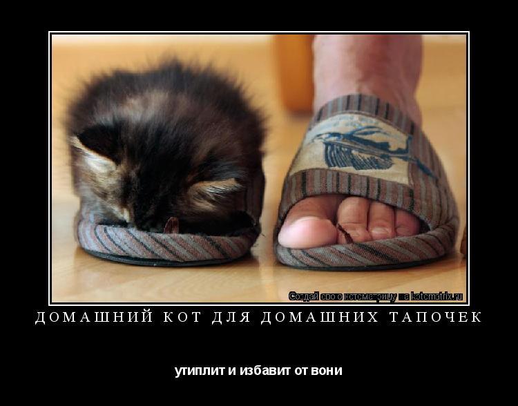 Котоматрица: Домашний кот для домашних тапочек утиплит и избавит от вони