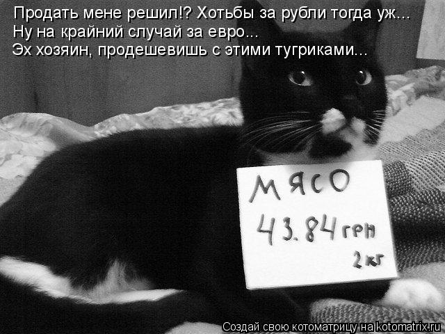 Котоматрица: Продать мене решил!? Хотьбы за рубли тогда уж... Ну на крайний случай за евро...  Эх хозяин, продешевишь с этими тугриками...