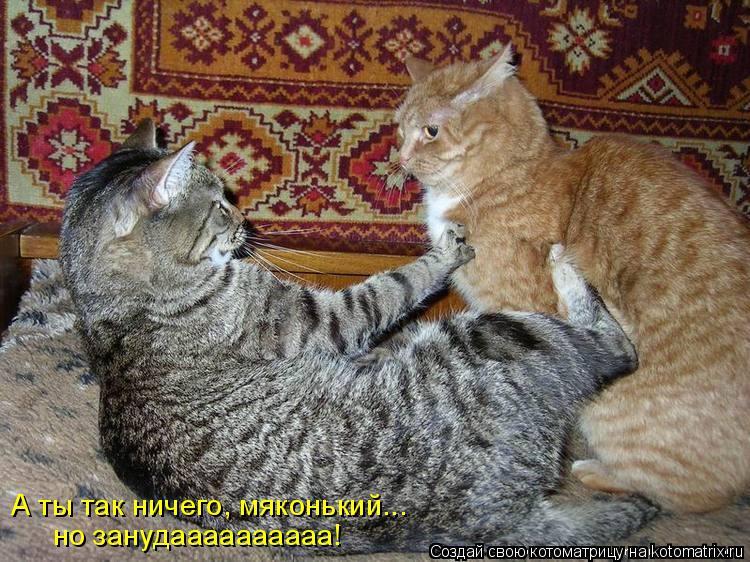Котоматрица: А ты так ничего, мяконький... но занудаааааааааа!