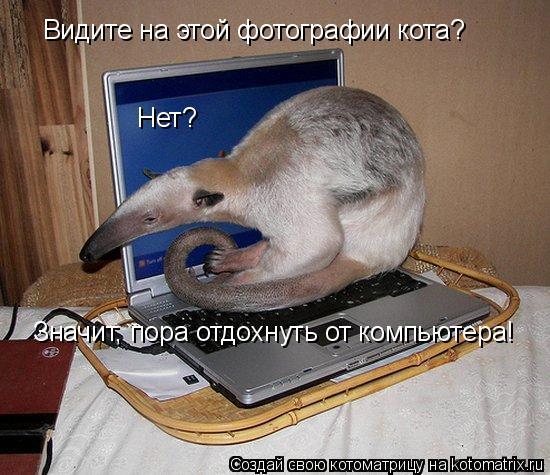 Котоматрица: Видите на этой фотографии кота? Нет? Значит, пора отдохнуть от компьютера!