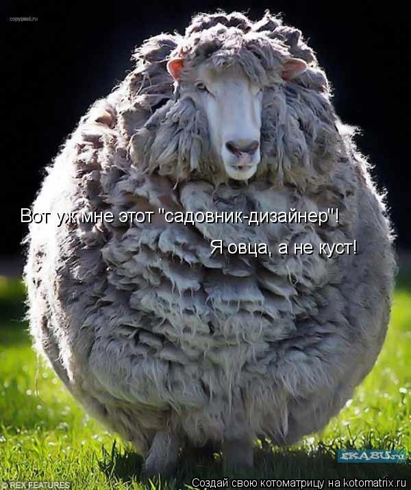 """Котоматрица: Вот уж мне этот """"садовник-дизайнер""""! Я овца, а не куст!"""
