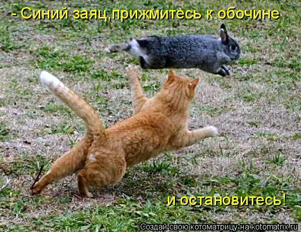 Котоматрица: - Синий заяц,прижмитесь к обочине  и остановитесь!