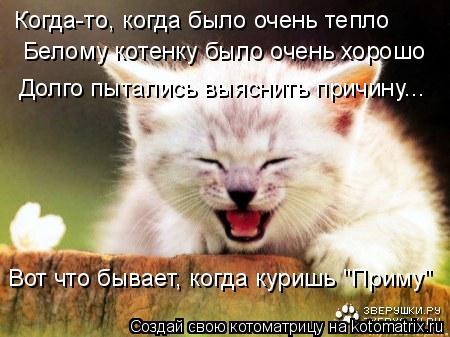 """Котоматрица: Когда-то, когда было очень тепло Белому котенку было очень хорошо Долго пытались выяснить причину... Вот что бывает, когда куришь """"Приму"""""""
