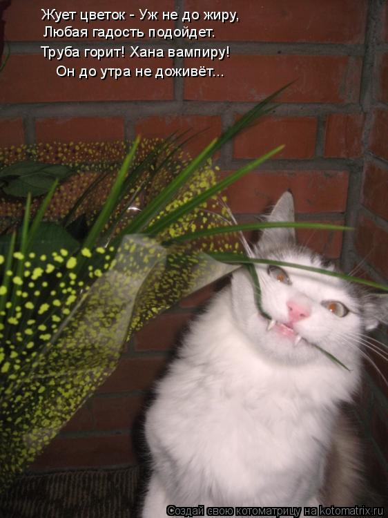Котоматрица: Жует цветок - Уж не до жиру, Любая гадость подойдет. Труба горит! Хана вампиру!  Он до утра не доживёт...