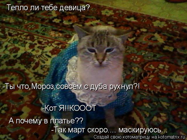 Котоматрица: Тепло ли тебе девица? -Ты что,Мороз,совсем с дуба рухнул?! -Кот Я!!КОООТ А почему в платье?? -Так март скоро.... маскируюсь...