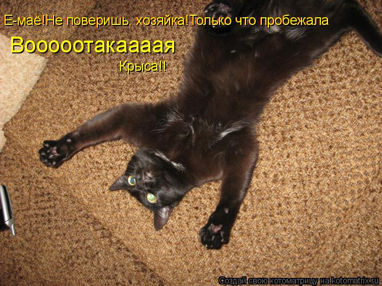 Котоматрица: Е-маё!Не поверишь, хозяйка!Только что пробежала Е-маё!Не поверишь, хозяйка!Только что пробежала Вооооотакаааая Крыса!!