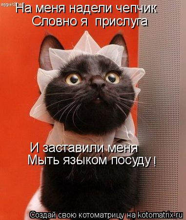 Котоматрица: На меня надели чепчик И заставили меня Мыть языком посуду Словно я  прислуга !