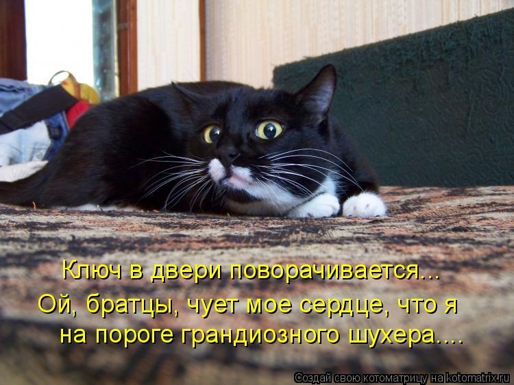 Котоматрица: на пороге грандиозного шухера.... Ой, братцы, чует мое сердце, что я Ключ в двери поворачивается...