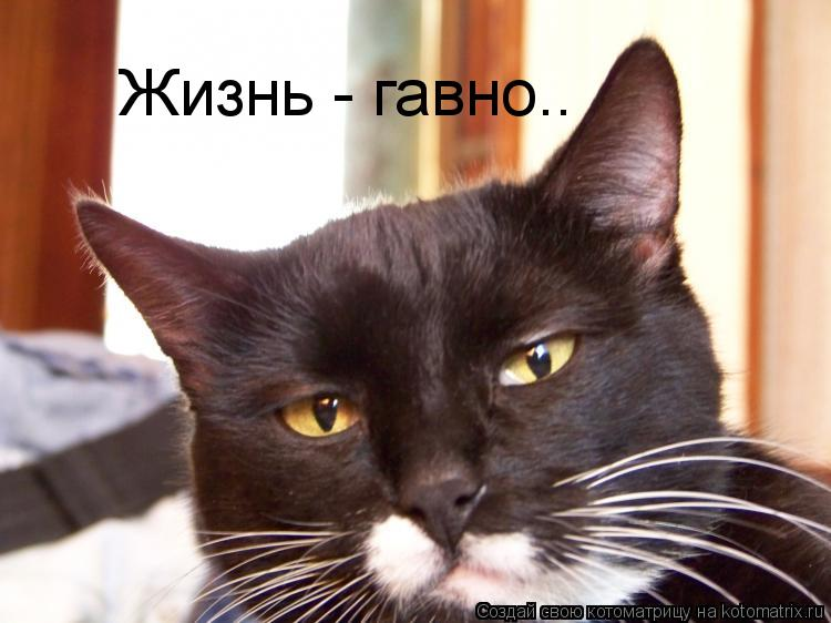 http://kotomatrix.ru/images/lolz/2009/08/20/343398.jpg