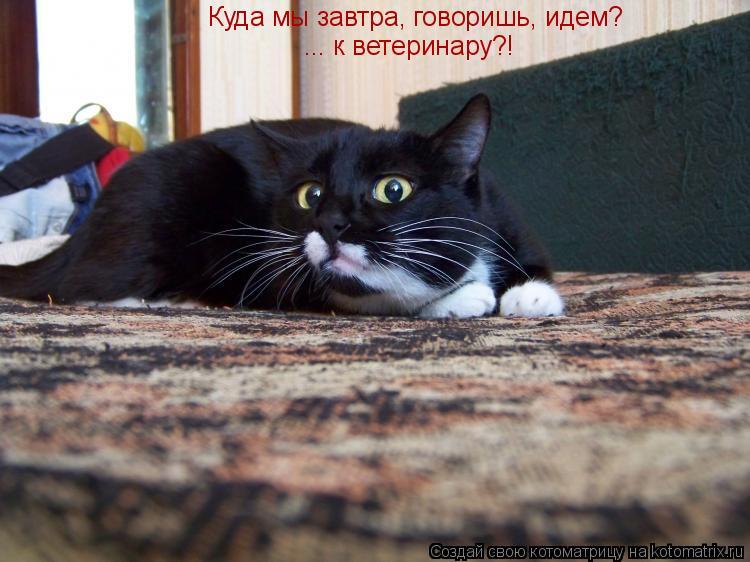 Котоматрица: Куда мы завтра, говоришь, идем? ... к ветеринару?!