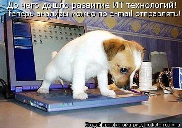 Котоматрица: - До чего дошло развитие ИТ технологий! Теперь анализы можно по e-mail отправлять!