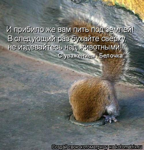 Котоматрица: И прибило же вам пить под землей! В следующий раз бухайте сверху, не издевайтесь над животными! С уважением, Белочка