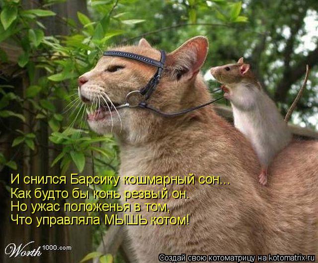 Котоматрица: И снился Барсику кошмарный сон... Как будто бы конь резвый он. Но ужас положенья в том, Что управляла МЫШЬ котом!