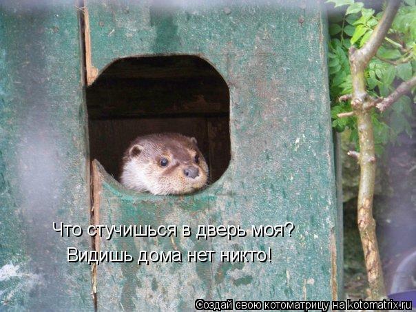 Котоматрица: Что стучишься в дверь моя? Видишь дома нет никто!