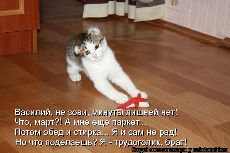 Котоматрица: Василий, не зови, минуты лишней нет! Что, март?! А мне еще паркет... Потом обед и стирка... Я и сам не рад! Но что поделаешь? Я - трудоголик, брат!