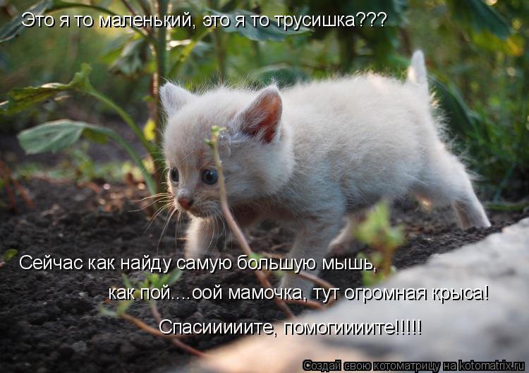 Котоматрица: Это я то маленький, это я то трусишка??? Сейчас как найду самую большую мышь,  как пой....оой мамочка, тут огромная крыса! Спасииииите, помогиии