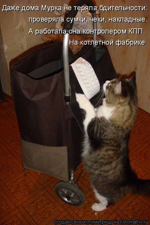 Котоматрица: Даже дома Мурка не теряла бдительности: проверяла сумки, чеки, накладные. А работала она контролером КПП. На котлетной фабрике