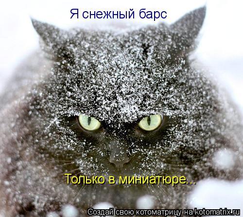 Котоматрица: Я снежный барс Только в миниатюре...