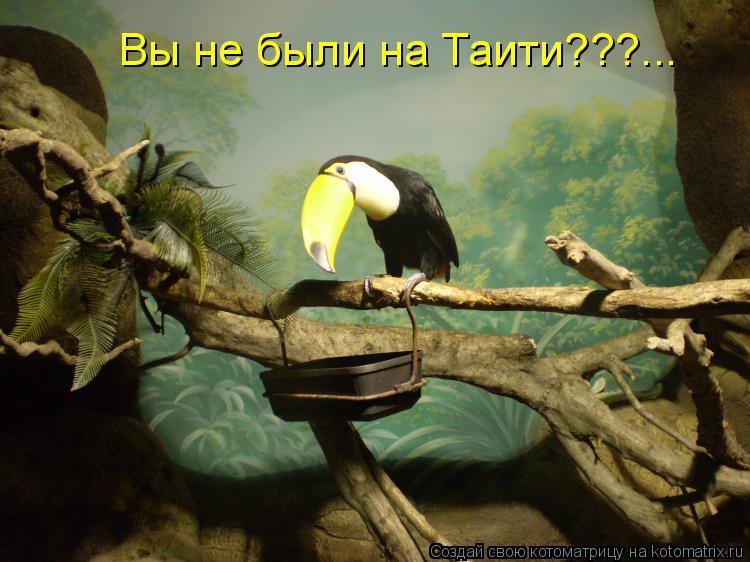 Котоматрица: Вы не были на Таити???...