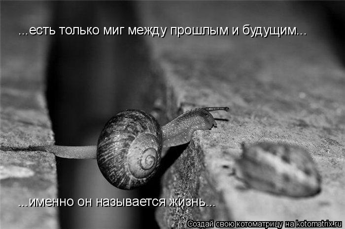 Котоматрица: ...есть только миг между прошлым и будущим... ...именно он называется жизнь...