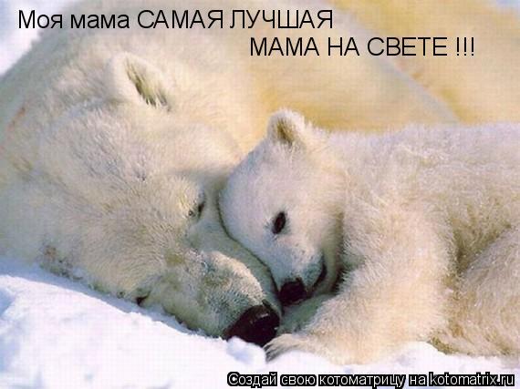 Котоматрица: Моя мама САМАЯ ЛУЧШАЯ МАМА НА СВЕТЕ !!!