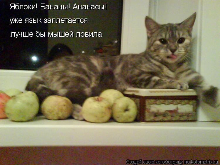 Котоматрица: уже язык заплетается Яблоки! Бананы! Ананасы! лучше бы мышей ловила