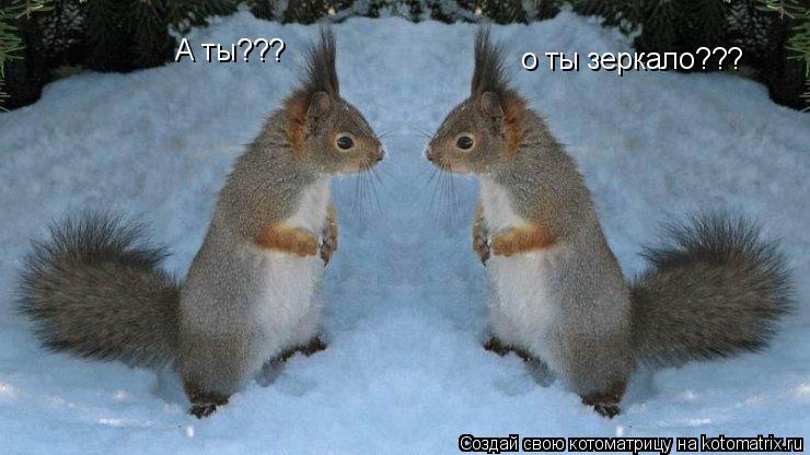 Котоматрица: о ты зеркало??? А ты???