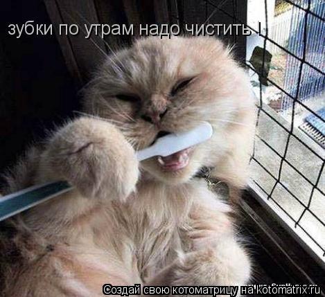 Котоматрица: зубки по утрам надо чистить !