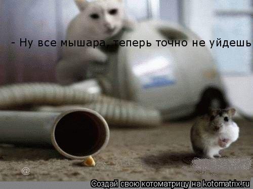 Котоматрица: - Ну все мышара, теперь точно не уйдешь