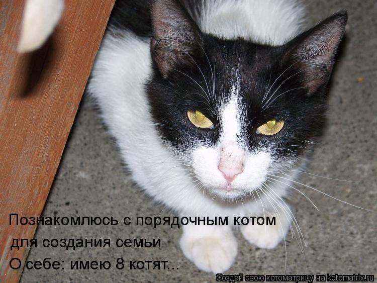 Котоматрица: Познакомлюсь с порядочным котом для создания семьи О себе: имею 8 котят...