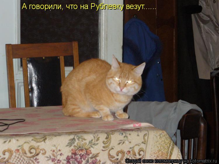 Котоматрица: А говорили, что на Рублевку везут......