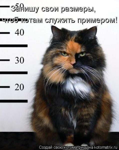 Котоматрица: Запишу свои размеры, чтоб котам служить примером!
