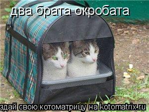 Котоматрица: два брата окробата