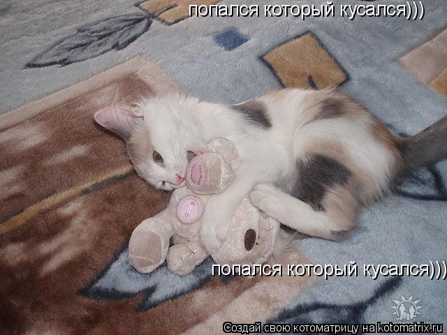 Котоматрица: попался который кусался))) попался который кусался)))