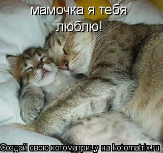 Котоматрица: мамочка я тебя  люблю!