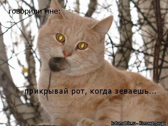 Котоматрица: говорили мне:  прикрывай рот, когда зеваешь...