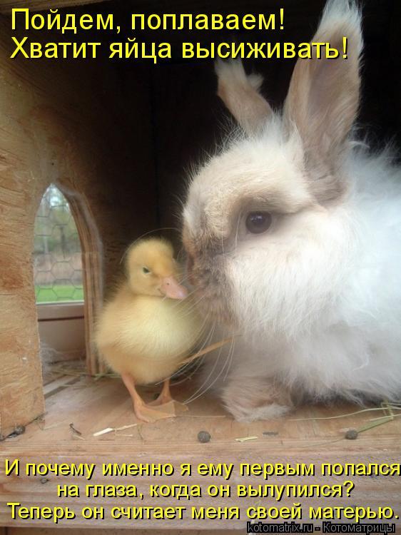 Котоматрица: Пойдем, поплаваем! Хватит яйца высиживать! И почему именно я ему первым попался  на глаза, когда он вылупился?  Теперь он считает меня своей м