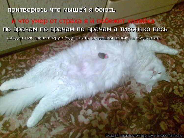 Котоматрица: притворюсь что мышей я боюсь и что умер от страха я и побежит хозяйка по врачам по врачам по врачам а тихонько весь  холодильник приватизиру