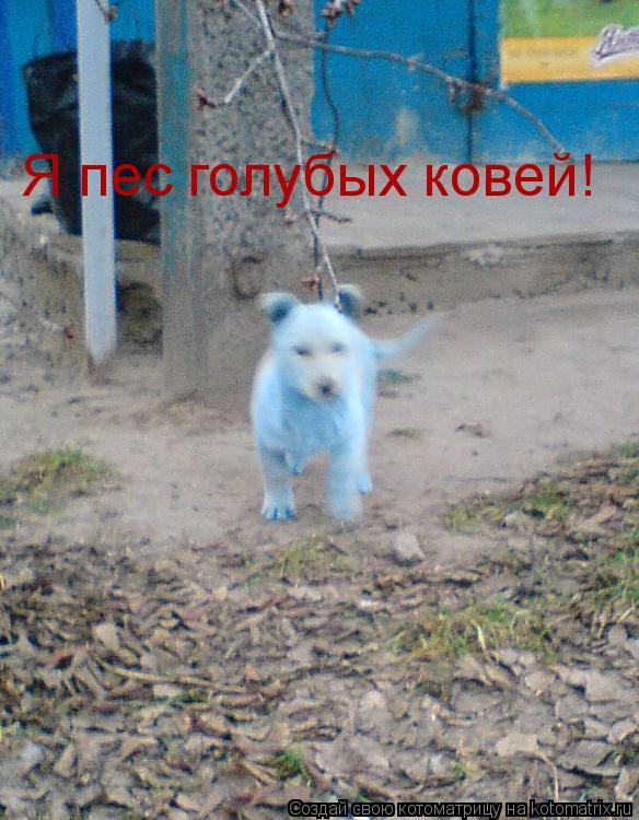 Котоматрица: Я пес голубых ковей!