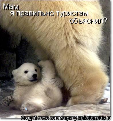 Котоматрица: Мам,  я правильно туристам  объяснил?