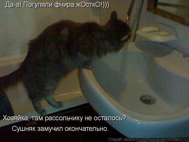 Котоматрица: Да-а! Погуляли фчира жОсткО!))) Хозяйка, там рассольчику не осталось? Сушняк замучил окончательно.