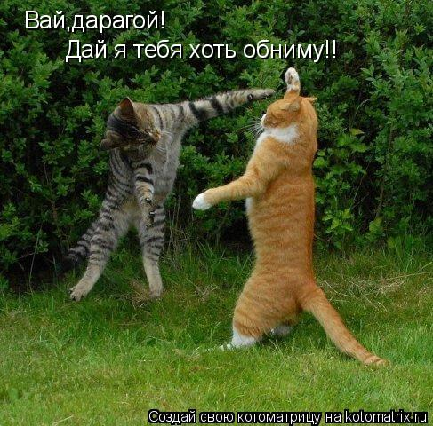 Котоматрица: Вай,дарагой! Дай я тебя хоть обниму!!