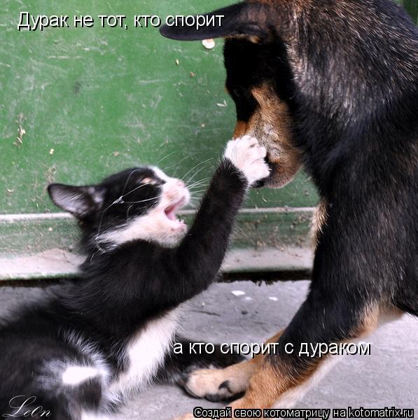 Котоматрица: Дурак не тот, кто спорит а кто спорит с дураком